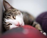 Förtjusande svartvita Cat Portrait på soffan Royaltyfri Bild