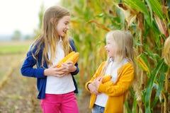 Förtjusande systrar som spelar i ett havrefält på härlig höstdag Nätta barn som rymmer majskolvar av havre Plockning med ungar royaltyfria bilder