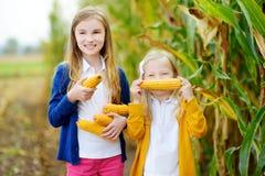 Förtjusande systrar som spelar i ett havrefält på härlig höstdag Nätta barn som rymmer majskolvar av havre Plockning med ungar royaltyfri fotografi