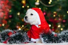 Förtjusande valp i jultomtenhatten som poserar för jul royaltyfri bild
