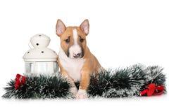 Förtjusande valp som poserar för jul på vit bakgrund arkivfoto