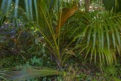 Förtjust Ferdinand naturlig reserv, Seychellerna royaltyfri foto