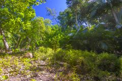 Förtjust Ferdinand naturlig reserv, Seychellerna arkivfoto