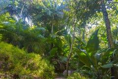 Förtjust Ferdinand naturlig reserv, Seychellerna royaltyfria bilder