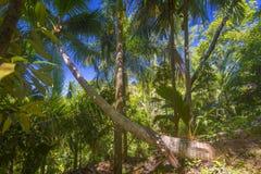 Förtjust Ferdinand naturlig reserv, Seychellerna arkivbilder