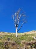 Förtorkat träd royaltyfri fotografi
