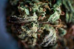 Förtrolig cannabis för LA, makrostil Fotografering för Bildbyråer