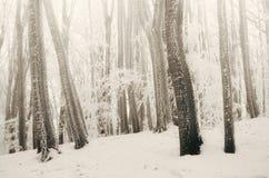 Förtrollad magisk vit vinterskog royaltyfria bilder