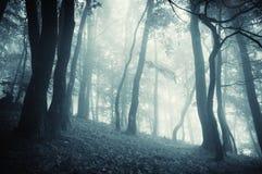 Förtrollad mystisk fantasiskog med dimma Arkivfoton