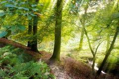 förtrollad skog arkivfoto