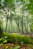 förtrollad skog Arkivbild