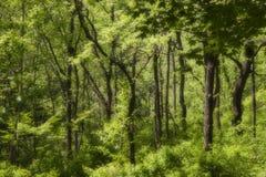 förtrollad skog Fotografering för Bildbyråer