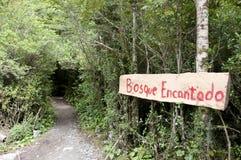 Förtrollad skog - den Queulat nationalparken - Chile royaltyfri fotografi