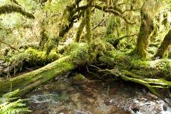 Förtrollad skog - den Queulat nationalparken - Chile fotografering för bildbyråer