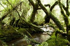 Förtrollad skog - den Queulat nationalparken - Chile royaltyfri foto