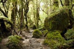 Förtrollad skog - den Queulat nationalparken - Chile royaltyfri bild