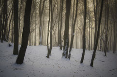 Förtrollad skog i vinter Royaltyfri Bild