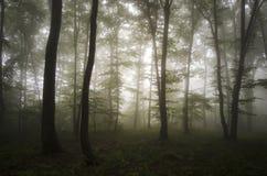 Förtrollad skog med mystisk dimma Arkivbild