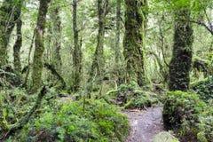 Förtrollad skog, Queulat nationalpark (Chile) fotografering för bildbyråer