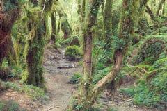 Förtrollad skog, Queulat nationalpark, Patagonia, Chile arkivfoto