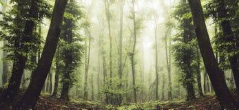 Förtrollad skogpanorama med mist och gräsplanlövverk royaltyfria foton