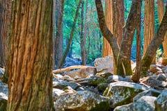 Förtrollad skogsikt med stenblock, trädstammar och skogen i bakgrunden arkivbild