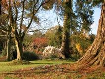 förtrollad trädgård Arkivbilder