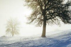 Förtrollad vintermorgon med snö och magiskt ljus till och med träd royaltyfri bild