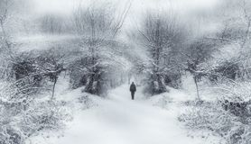 Förtrollad vintersagaskog royaltyfria bilder