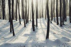 Förtrollad vinterskog royaltyfria foton