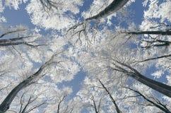 Förtrollad vinterskog med frost på blå himmel arkivbild