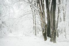 Förtrollad vinterskog med frost på träd och tung snö arkivbilder