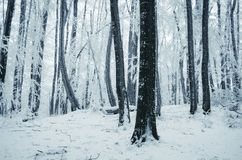 Förtrollad vinterskog med hoarfrost arkivfoto