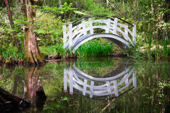 Förtrollade reflexioner royaltyfri bild