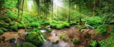 Förtrollande panorama- skoglandskap i mjukt ljus fotografering för bildbyråer