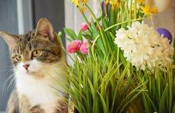 förutom kattblommor Royaltyfria Foton