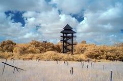Förutom mangroveutbildningsmitt i near infared stil vid IR Arkivbilder