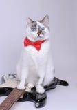 Förvånad blåögd katt med den röda flugan och den elektriska gitarren arkivfoto