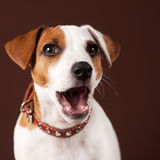 förvånad hund Arkivfoto