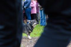 förvånad hund Arkivbild