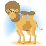 förvånad kamel Arkivfoto