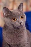 förvånad katt Arkivfoto