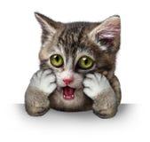 förvånad katt Arkivbild