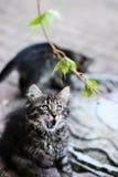Förvånad katt, kattunge med den öppna munnen, kattunge som spelar med en växt, katt- gyckel, kattunge med sidor, kattunge som spe Arkivfoto