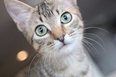förvånad kattunge royaltyfri foto