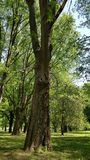 Förvånat träd!! royaltyfri bild