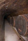 förvara i källare wine arkivbilder