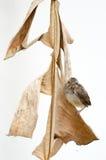 fött nytt för fågel Arkivfoton