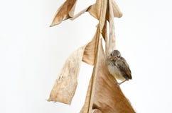 fött nytt för fågel Royaltyfria Bilder