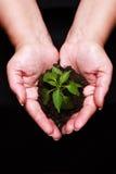 fött plantera nytt Arkivfoton